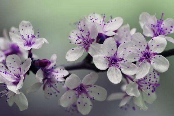 blossom-839594